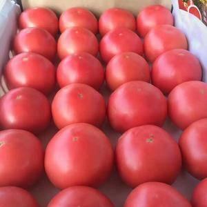 谁需要西红柿联系我13460885392 我有大量无公...