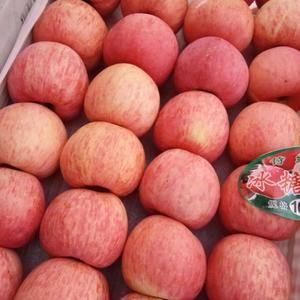陕北高原红富士苹果大量上市,质量好,价位合理,口感好,亮...