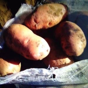 河北围场彩色土豆荷兰十四,粉红皮淡黄肉,个头大,颜色好,...