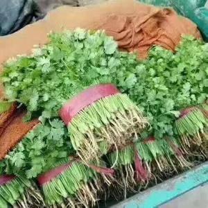 永年蔬菜市场,大量批发香菜13483408502