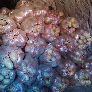 河北围场和内蒙优质土豆冀张薯,个头特大,2~3斤比较多,...