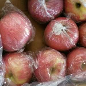 陕西膜袋红富士苹果大量上市供应中,今年苹果颜色好,货源充...