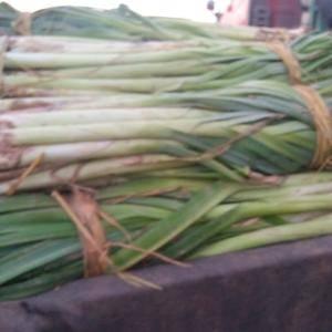 铁杆葱葱白长耐运输种植面际大