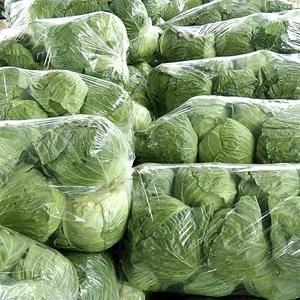 各种蔬菜大量上市中,有需要的联系。