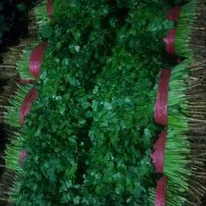永年蔬菜市场大量香菜上市13483408502