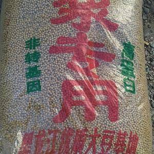 大量提供优质大豆,欢迎客商订货15754653666