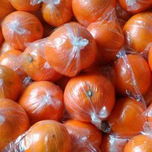 湖南湘西脐橙、椪柑、果形端正、色泽橙黄、带红润、肉脆汁多...