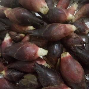 洋合笋,山中珍品,香味独特,营养丰富,纯天然食品