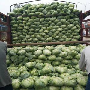 大小平包,货源充足,另有花菜,有机花菜,夏阳白菜,萝卜,...