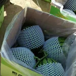 甘肃大漠吊西瓜,常年供应鲜货,有需要客商联系订购。