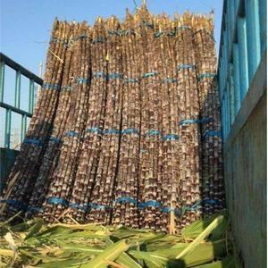 黑甘蔗货源充足,高瑞产品,质量保证,水份甜度高,可提供样...