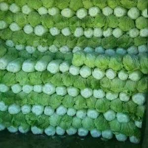 大量供应大白菜,价格看货订价。有需要的与小吕联系,电15...