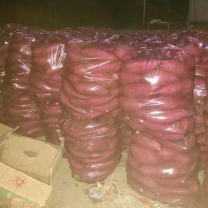 大量有货淀粉红薯价格0.28/0.3