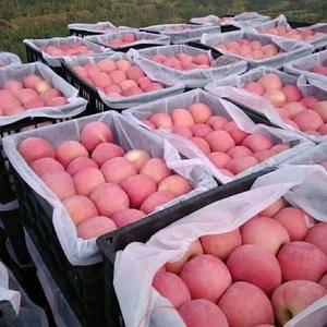 山东红富士苹果产地批发!货源充足!质量保证!需要的客商请...
