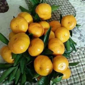 大量脐橙纽荷尔,国庆蜜桔产地直销,货源充足,质量保证。需...