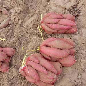 山东省德州市夏津县后赵庄地瓜种植基地,大量出售优质济薯2...