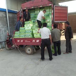 甘肃大漠吊瓜,常年供应现货为主,联系电话,1389351...