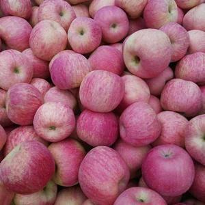 18369431469山东红富士苹果产地直销,《纸袋的》...