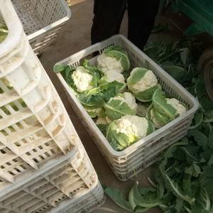 我处华丰农副产品批发市场。大量菜花上市,质量优,量大优惠...