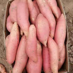 烟署25地瓜干,香甜软糯,供应蜜薯。
