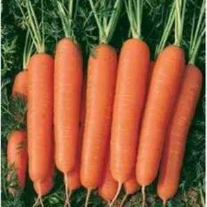 大量上市胡萝卜!有要的老板联系13783998678