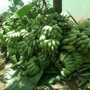 西贡蕉,货源充足求老板收购。