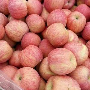 山东苹果产地大量供应水晶富士、红富士、黄金帅,膜袋,纸袋...