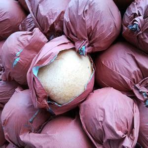 陕西大荔宇轩瓜果专业合作社给客户提供优质的酥梨,价位非常...