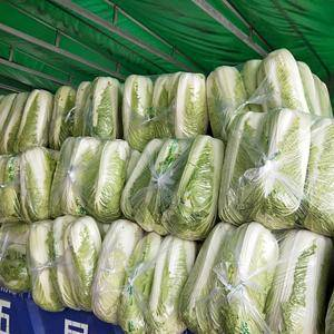 北京新三号大白菜大量上市,包心结实紧凑,无病虫