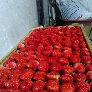 出售甜宝草莓