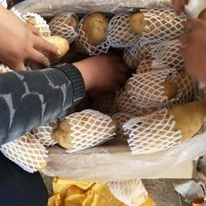 荷兰十五土豆大量供应,山东肥城冷库货,雨前货,2两半以上...