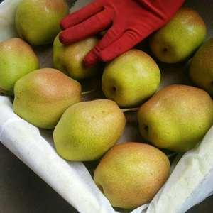 陕西红香酥梨是衔接早酥梨和酥梨的中熟品种,于7月中旬上市...