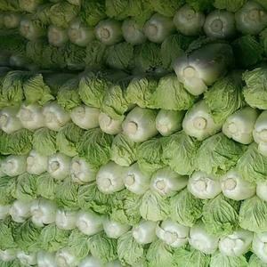 北京三号白菜装袋净菜,包纸平包精品,网袋毛菜。
