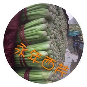 河北省南部最大的蔬菜基地,邯郸永年最大市场欢迎新老客户前...