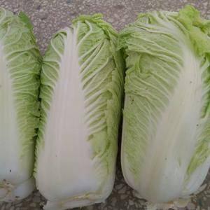 自家种植的白菜,有需要的联系17756589693.没有...