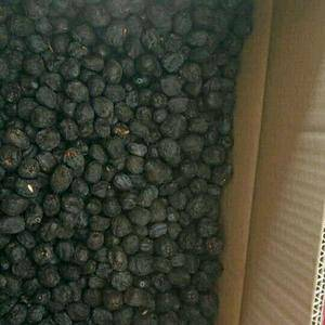 黑枣,学名君迁子,又称野柿子,属于柿树科柿属,广泛分布于...