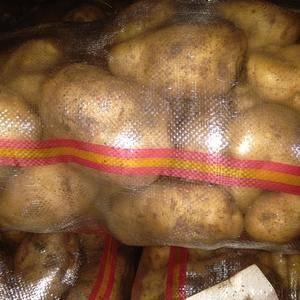 大量批发代办河北围场土豆张薯226,个头特大薯型椭圆颜色...