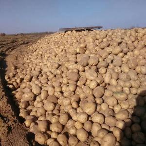 本人有克星土豆出售,联系方式18292250030