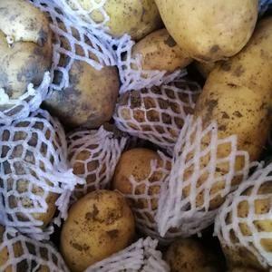 大量冷库土豆待售,有箱装  袋装两种。三两到通天。价格1...
