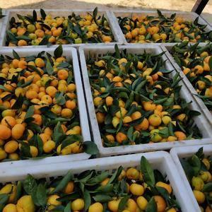 南丰密桔自产自销,绿色食品,无添加剂。