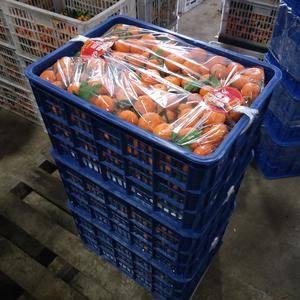 江西南丰蜜橘代办批发大量上市。需要的老板加1517949...