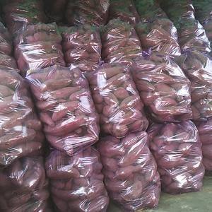 鲁西北地区红薯大量出售,品种龙薯九  红皮苏八   济薯...