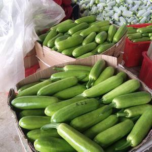 万亩暖棚,绿皮西葫芦,大量上市,货源充足,供应到5月份,...