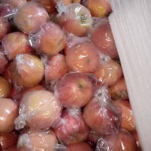 大量供应山西省运城临猗坡上苹果,地面果75以上膜袋七毛到...