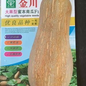 金川系列密本南瓜产量高,瓜大品质优,抗性好,销售热线:1...