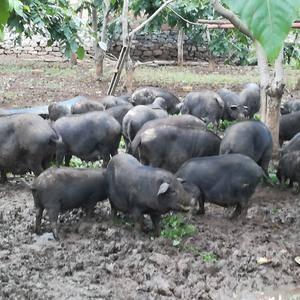 生态农业养殖绿色食品