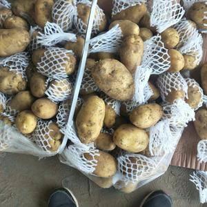 莱西库存土豆,需要的联系我。