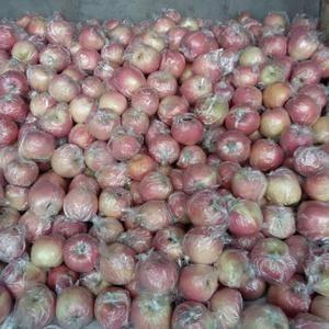 大量供应纸袋、纸加膜、膜袋红富士苹果,质优价廉、口感甜脆...