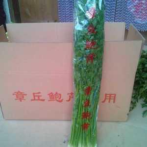 正宗章丘鲍芹,自产自销13220575227