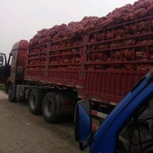 山东夏津善民薯业大量供应龙薯九号、红黄苏八、西农431、...